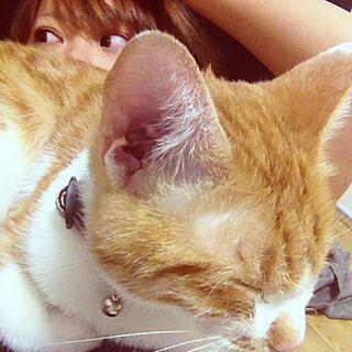 soraのインテリア実例 - 2013-10-18 22:08:00