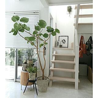 DIYの人気の写真(RoomNo.3202024)