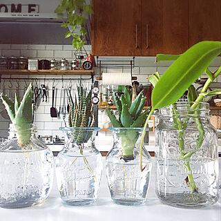 ガラス/ガラス瓶/セリアの瓶/ウツボカズラ/観葉植物...などのインテリア実例 - 2020-08-18 00:31:41