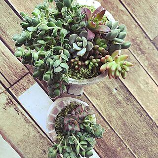 女性家族暮らし、初めての多肉植物♡に関するazusaさんの実例写真