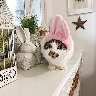 女性家族暮らし、catに関するyuchiさんの実例写真