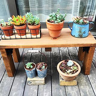 家族暮らし3LDK、植物 多肉植物に関するhiroさんの実例写真