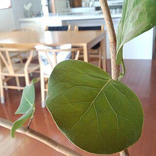 部屋全体/skovby/シナマーク/北欧/観葉植物...などのインテリア実例 - 2015-04-02 12:01:50