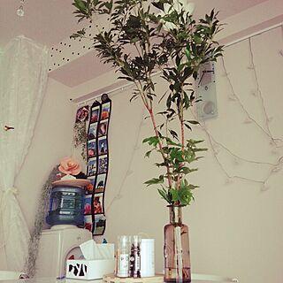 部屋全体/観葉植物ビギナー/ACTAS/浪費家の妻とは私のこと。/ボタニカル病/植物のインテリア実例 - 2014-08-25 15:35:41