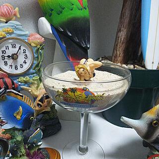 同棲、珊瑚に関するfoxさんの実例写真