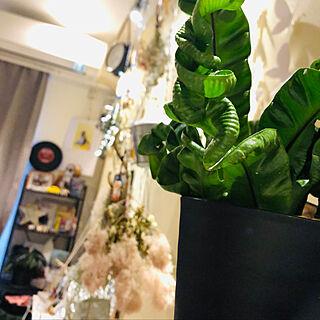 アロカシアブラックベルベット/スモークツリー/アスプレニウム アカキ/チランジア/植物のある暮らし...などのインテリア実例 - 2021-02-26 23:17:31
