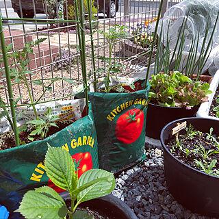 女性35歳の家族暮らし4LDK、家庭菜園に関するryooooさんの実例写真