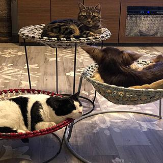 猫スペース/犬ベッド/いいね♪いつもありがとうございます❤️/猫ベッド手作り/猫ベッド手編み...などのインテリア実例 - 2020-04-03 21:08:11