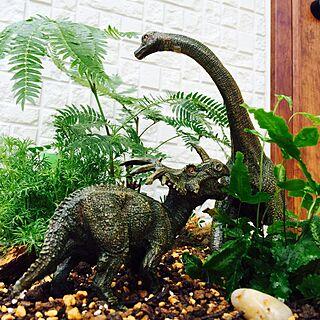 女性家族暮らし、恐竜たまごに関するlot9さんの実例写真