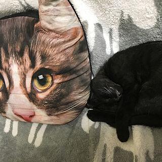 女性その他、飼い猫に関するmiyabiさんの実例写真