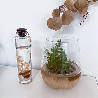 ハーバリウム/観葉植物/白い壁/しっくい壁/棚のインテリア実例 - 2020-04-07 08:44:47