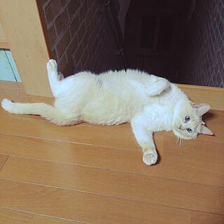 リビング/2017.06.24/サララ♀10歳/猫と暮らす/保護猫...などのインテリア実例 - 2017-06-24 00:08:06