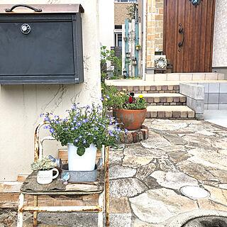 多肉植物/グニーユーカリ/板壁DIY/寄せ植え初心者/玄関アプローチ...などのインテリア実例 - 2019-06-15 12:15:29