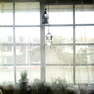 女性3DK、窓際に関するizurinaさんの実例写真