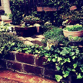玄関/入り口/小さなお庭/煉瓦DIY/植物/雑貨...などのインテリア実例 - 2016-05-31 05:29:23