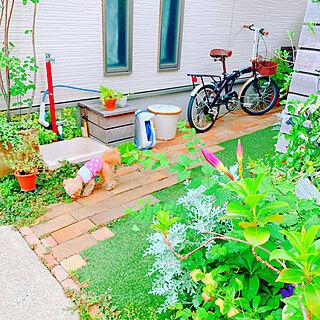 椅子/Ig→risa6100/わんこと暮らす家/グリーンのある暮らし/植物のある暮らし...などのインテリア実例 - 2019-06-23 20:30:54