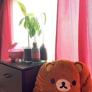観葉植物/棚のインテリア実例 - 2020-02-22 08:08:25