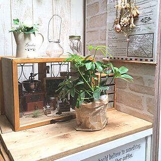 観葉植物のある暮らしの人気の写真(RoomNo.2651495)