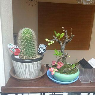 女性家族暮らし4LDK、ボケの花に関するMIHさんの実例写真