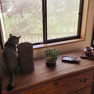 女性家族暮らし3DK、トラに関するmin2413さんの実例写真