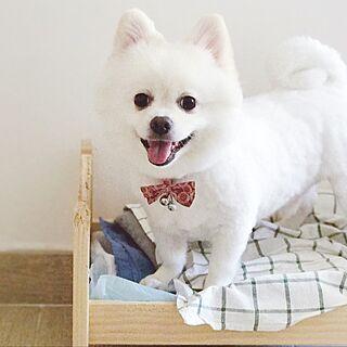 リビング/My Dogのインテリア実例 - 2017-01-02 17:14:44