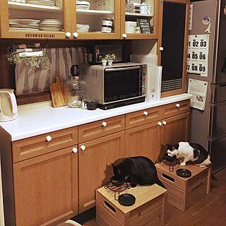 キッチン/あずき9ヶ月/猫/セリア/フェイクグリーン...などのインテリア実例 - 2017-05-17 22:43:37