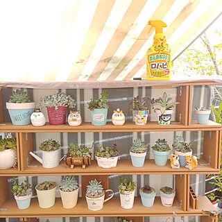 玄関/入り口/ガーデニング/植物のある暮らし/害虫対策/アースガーデン...などのインテリア実例 - 2021-05-13 21:15:10