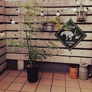 部屋全体/NO GREEN NO LIFE/DIY/植物/手作り...などのインテリア実例 - 2014-09-06 15:42:16