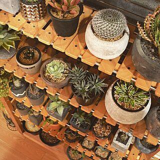 リビング/コロラータ/DIY/植物棚/アガベ...などのインテリア実例 - 2015-05-15 20:04:26