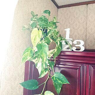 棚/植物欲が止まらない/植物園化 計画!/緑を増やしたい/RC秋田支部...などのインテリア実例 - 2016-06-16 12:58:08