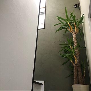 照明/雑貨/DIY/漆喰/観葉植物...などのインテリア実例 - 2020-08-15 12:54:52