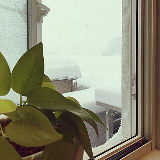 女性家族暮らし4LDK、暴風警報発令中に関するkiraraさんの実例写真