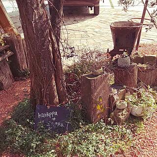 素敵空間/植物のある暮らし/cafe/cafe巡り❤️/gardenのインテリア実例 - 2018-12-02 01:16:32