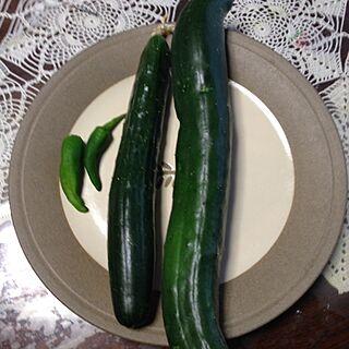 家族暮らし、今日の収穫に関するmomoさんの実例写真