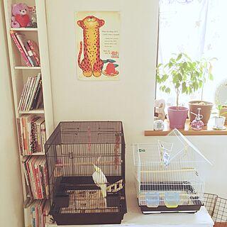 棚/ポスター/インコ/ペットと暮らす家/IKEA...などのインテリア実例 - 2015-06-09 08:31:04