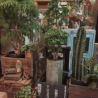 サボテン/ポリシャス/インドアグリーン/I Love Plants/ディスプレイ...などのインテリア実例 - 2016-12-22 22:59:58