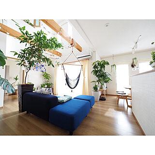 観葉植物の人気の写真(RoomNo.3221948)