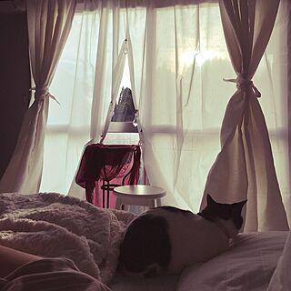 壁/天井/夕陽と。/海外インテリア好き/猫と暮らす/モノトーン化計画...などのインテリア実例 - 2017-01-04 16:19:01