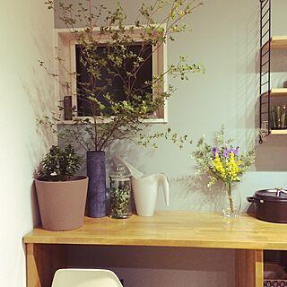棚/作業台/金のなる木/IKEAじょうろ/花瓶...などのインテリア実例 - 2016-08-11 22:56:31