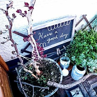 玄関/入り口/グリーンのある暮らし/建て売り一戸建て/フォロワーの皆様に感謝です♫/100均大好き...などのインテリア実例 - 2017-09-19 18:20:44