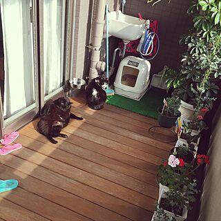 玄関/入り口/チロちゃん♡/トロ君♡/植物のある暮らし/ウッドデッキ...などのインテリア実例 - 2017-05-16 07:19:31
