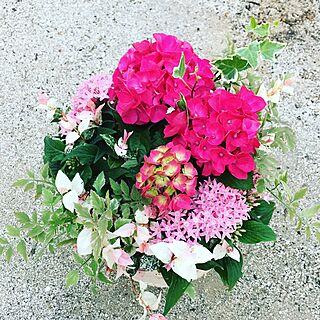 鉢が可愛い/雨が似合うお花/ギャザリング/ガーデニング/お花屋さん...などのインテリア実例 - 2017-06-20 20:52:37