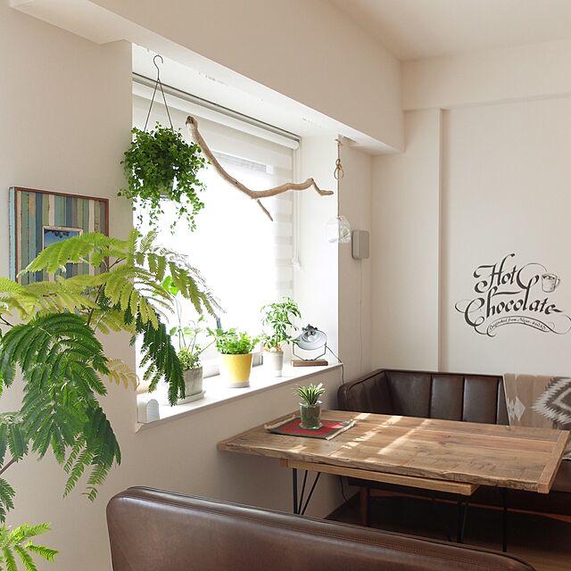 My Desk/unico/新築マンション/エバーフレッシュ/観葉植物...などのインテリア実例