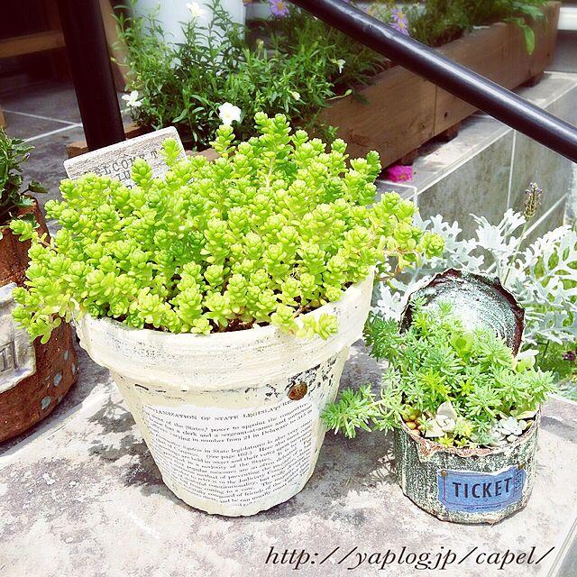 Entrance/リメ鉢/リメ缶/多肉植物/ガーデン...などのインテリア実例