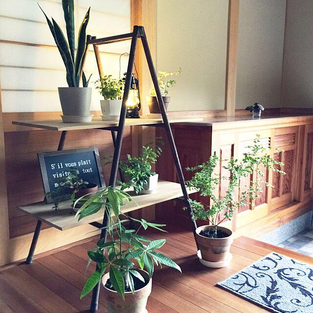 Entrance,観葉植物,玄関,パイプ脚立のインテリア実例   RoomClip (ルームクリップ)