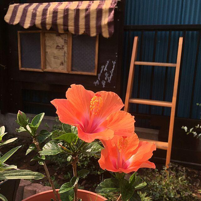Overview,ガーデニング,みんな大好き♡,木が好き,フォロワーさんに感謝♡,いつもいいね!ありがとうございます♪,皆さんのお陰で励みになってます♡,ヘイヘイホー部,花も緑も好き♡,娘のベット再利用♡,フリーハンド♡のインテリア実例 | RoomClip (ルームクリップ)