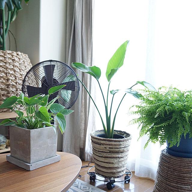 Lounge/ドウシシャ/扇風機/NO GREEN NO LIFE/観葉植物...などのインテリア実例