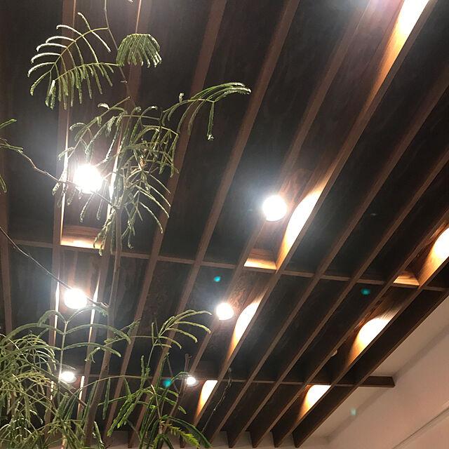On Walls,観葉植物,照明,アンティーク,天井,リビング,間接照明,一人暮らし,ミッドセンチュリー,チェア,広島,空間デザイン,暮らしの一コマのインテリア実例   RoomClip (ルームクリップ)