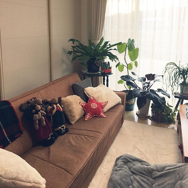 Lounge,観葉植物,いいね&フォローありがとうございます♡,ブラウン会,人形作家さんのぬいぐるみのインテリア実例 | RoomClip (ルームクリップ)