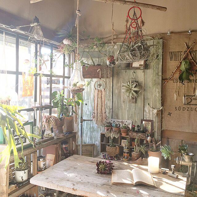Overview,植物,サボテン,DIY,流木,after,いなざうるす屋さん,窓枠風,壁面ディスプレイ,インドアグリーンのインテリア実例 | RoomClip (ルームクリップ)